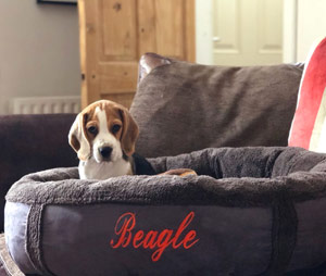 Personalised Dog Bed Donut Bed With Dogs Name D for Dog